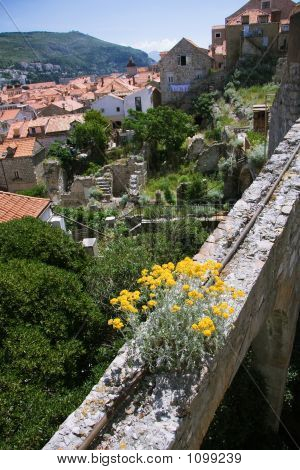 Wildflowers Growing On The Ruins Of Dubrovnik