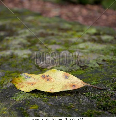 Close up of dried leaf on moss stone