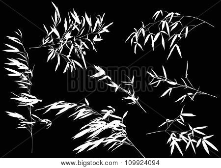 illustration with bamboo branches collection on black background