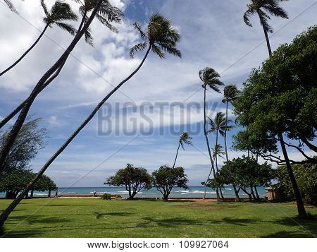 Grass Field, Coconut, And Other Trees In Park With Shore Wall Next To Shallow Ocean Waters