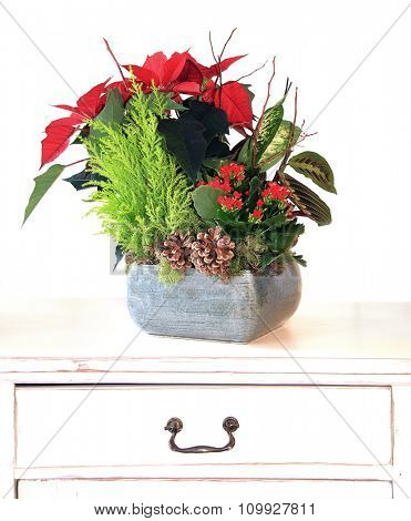 Indoor Floral arrangement for Christmas.