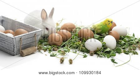 Budgerigar and rabbit with eggs isolated on white background.