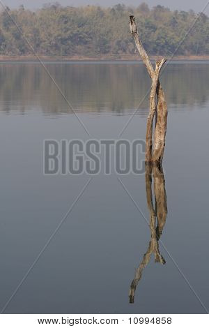 Dead tree immerse in the reservoir