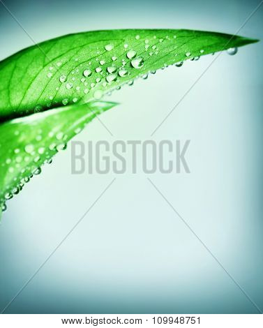 Fresh green natural border, leaf covered with dew drops over clear blue background, purity and harmony, spa concept