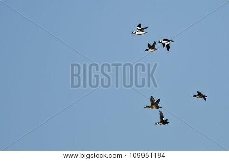 Flock Of Bufflehead Ducks Flying In A Blue Sky