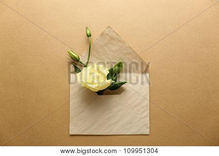 White eustoma in envelope on beige background