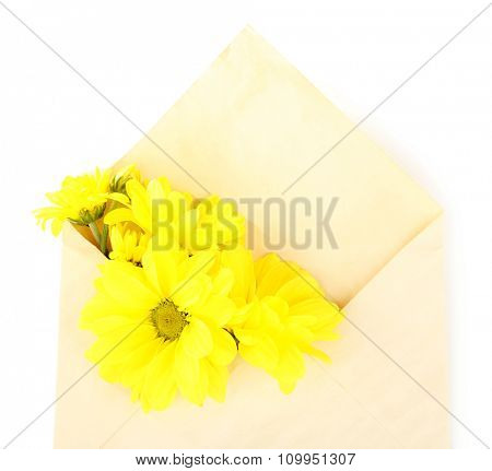 Yellow chrysanthemum in envelope, isolated on white