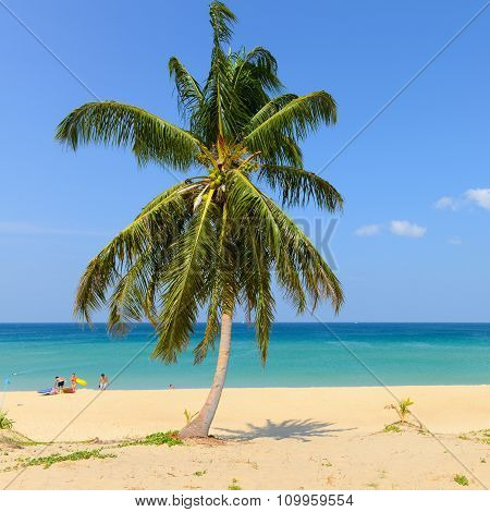 Tropical Beach With Coconut Palm Trees And Blue Sky