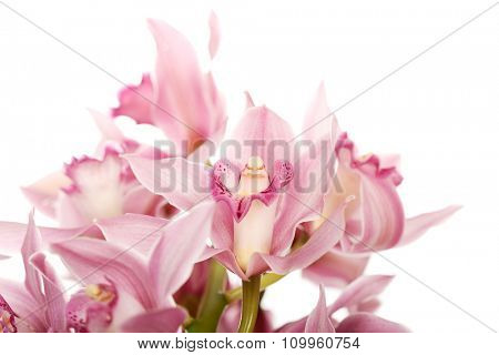 Beautiful fresh pink lily bouquet.
