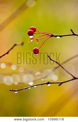 Autumn Branches