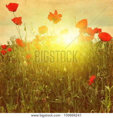 Poppy field at sunset in grunge style.