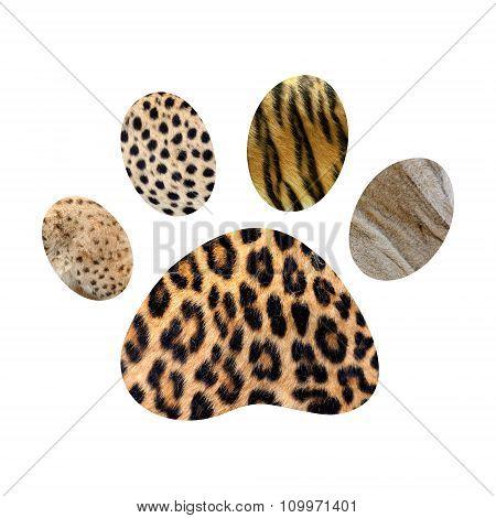 Wild Animal Footprint