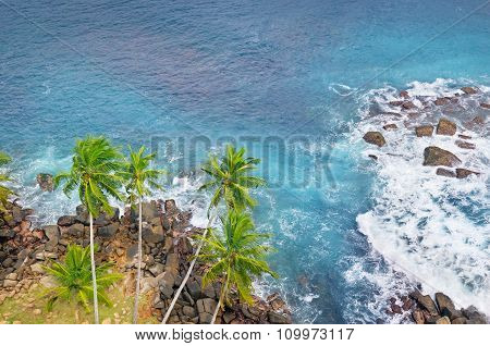 Ocean, Rocky Shore And Coconut Palms (top View)