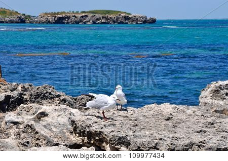 Silver Sea Gulls: Limestone Coast Line at Cape Peron