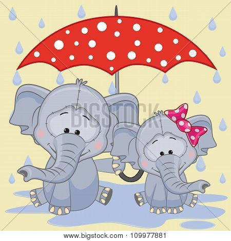 Two Elephants With Umbrella