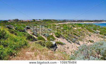 Dune Vegetation: Cape Peron, Western Australia