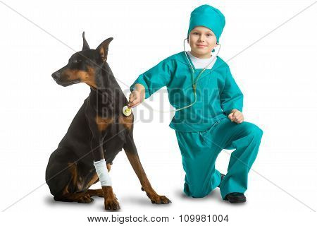 Cute little boy dressed like doctor treated dog or doberman isolated on white background. Veterinary