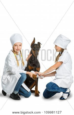 Cute little girls dressed like doctor treated dog or doberman isolated on white background. Veterina
