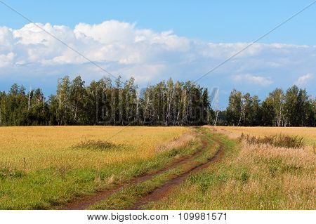 Field Road To The Birch Forest