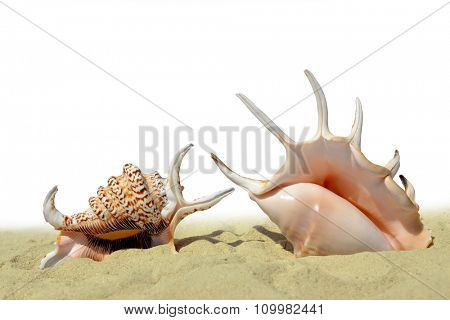 Seashells on the sand isolated on white background