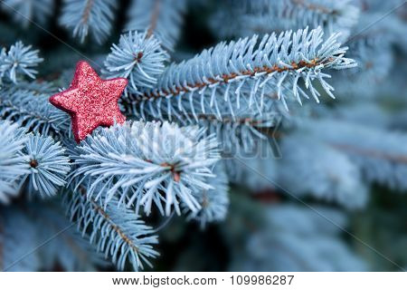 Blue Pine branches and red Christmas star