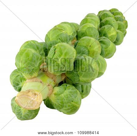Brussels Sprout Stalks