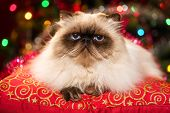 Funny Persian Cat Lying On A Christmas Cushion With Bokeh poster