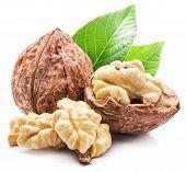 Постер, плакат: Walnut and walnut kernel isolated on the white background