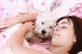 foto of westie  - Westie sleeping next to woman in bed  - JPG