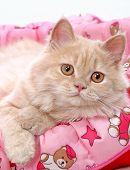 Cat Ginger 02 poster