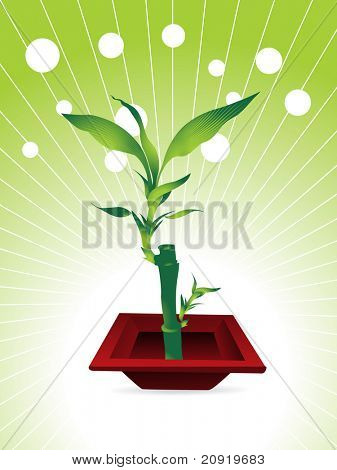 little bamboo tree with nice red pot, vector illustration