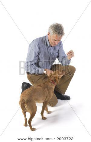 Entrenamiento del perro