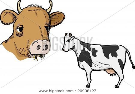 Cow Profile