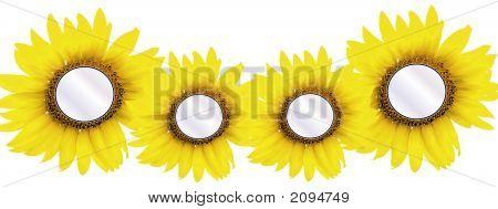 4 Sonnenblume Einfügungen