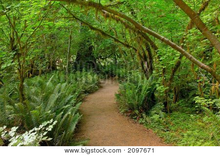 Rain Forest Trail