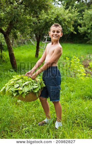 Boy With A Basket Of Lettuce