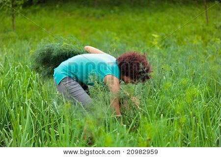 Young Woman Harvesting Dill
