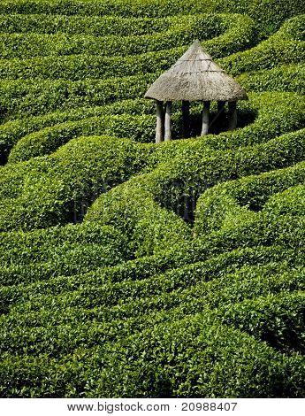 Hedged maze