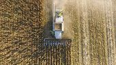 Harvester Harvests Corn. Collect Corn Cobs With The Help Of A Co poster