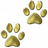 Animal Foot Prints  poster