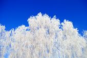 Frost On A Tree Branches. Christmas. poster