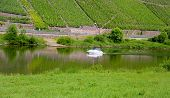 White Boat On Moselle