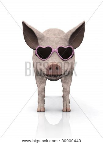 Cool Ferkel mit Sonnenbrille.