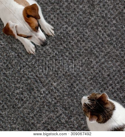 poster of Dog and cat together. Dog hugs a cat on the rug at home. Friendship of pets