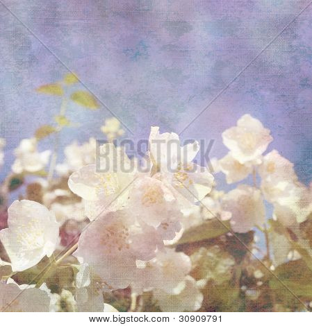 Background With Flowers Of Jasmine
