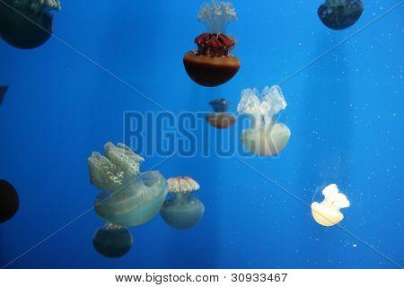 Floating jellyfish