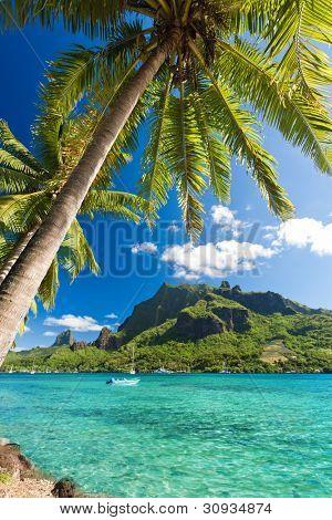 Palm Trees on Shoreline of Ocean at Moorea in Tahiti