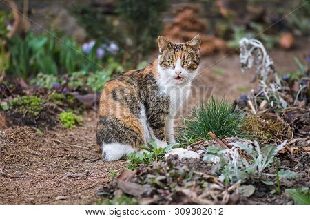 poster of Adult Domestic Cat Sitting In Grass. Cat In The Summer Garden