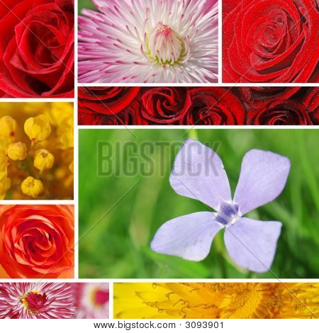 Flower Textures Collage