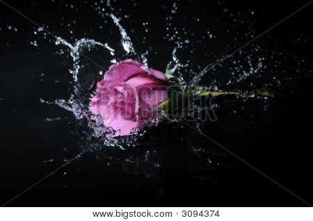 Lavender Rose Splash